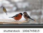bird bullfinch pecks sunflower... | Shutterstock . vector #1006745815