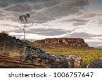 a single tree at dusk in the...   Shutterstock . vector #1006757647