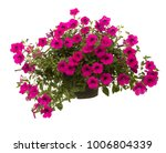 Petunia Isolated On White...