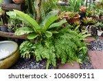 beautiful tropical green garden ... | Shutterstock . vector #1006809511