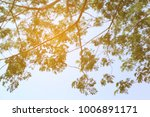 abstract spring image. green... | Shutterstock . vector #1006891171
