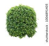 bush isolated on white... | Shutterstock . vector #1006891405