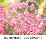 pink flowers and nature... | Shutterstock . vector #1006892944