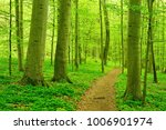 footpath winding through...   Shutterstock . vector #1006901974