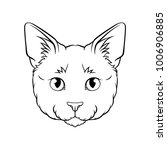 black and white sketch of cats... | Shutterstock .eps vector #1006906885