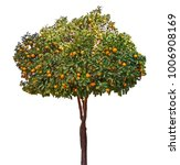 citrus tree on white background | Shutterstock . vector #1006908169