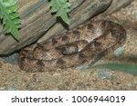 snake in forest  wild animals | Shutterstock . vector #1006944019