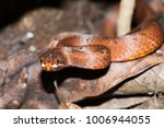 snake in forest  wild animals | Shutterstock . vector #1006944055
