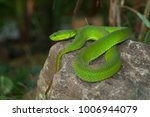snake in forest  wild animals | Shutterstock . vector #1006944079