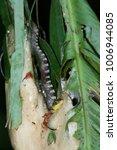 snake in forest  wild animals | Shutterstock . vector #1006944085