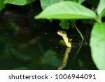 snake in forest  wild animals | Shutterstock . vector #1006944091