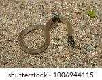 snake in forest  wild animals | Shutterstock . vector #1006944115