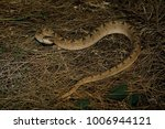 snake in forest  wild animals | Shutterstock . vector #1006944121