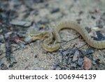 snake in forest  wild animals | Shutterstock . vector #1006944139