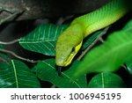 snake wild animals | Shutterstock . vector #1006945195