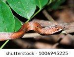 snake wild animals | Shutterstock . vector #1006945225