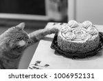 cat sweet cake lover | Shutterstock . vector #1006952131