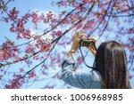 the photographer take a sakura... | Shutterstock . vector #1006968985