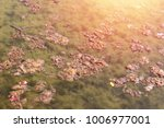 dirty sewage lake with organic... | Shutterstock . vector #1006977001