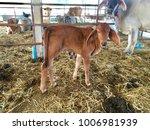 baby buffalo in conutryside | Shutterstock . vector #1006981939