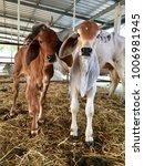 baby buffalo in conutryside | Shutterstock . vector #1006981945