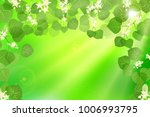 forest fresh green leaves with... | Shutterstock .eps vector #1006993795
