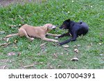 The Brown Dog And Black Dog...