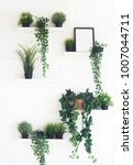 green plants on white shelves... | Shutterstock . vector #1007044711