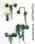 green plants on white shelves... | Shutterstock . vector #1007044711