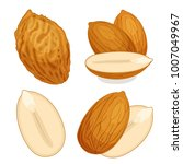 almond vector. a set of whole... | Shutterstock .eps vector #1007049967