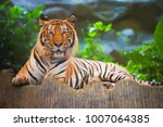 bengal tiger in forest | Shutterstock . vector #1007064385