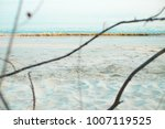 sea with branches on the beach | Shutterstock . vector #1007119525
