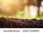small plant in the morning...   Shutterstock . vector #1007124091