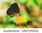 close up  beautiful butterfly | Shutterstock . vector #1007193031