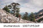 single evergreen trees covering ... | Shutterstock . vector #1007195269