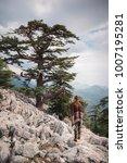 single evergreen trees covering ... | Shutterstock . vector #1007195281