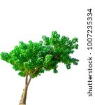big green tree  isolated on a...   Shutterstock . vector #1007235334