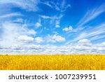 wheat field. ears of golden... | Shutterstock . vector #1007239951