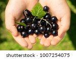 close up image of kid hands... | Shutterstock . vector #1007254075