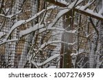 Small photo of snowfall, bare branches with rudiments of germs, severe frost
