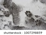 Small photo of Canidae left a trace. Winter hunting. Traces of the predator in the snow.