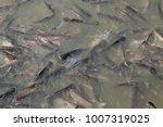 iridescent shark  striped... | Shutterstock . vector #1007319025