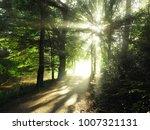 Beautiful Natural Light On A...