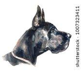 great dane   hand painted...   Shutterstock . vector #1007323411