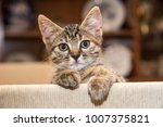Stock photo cut baby tabby kitten playing 1007375821