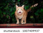the cat sits on the fence | Shutterstock . vector #1007409937