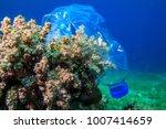 plastic bottle on coral reef | Shutterstock . vector #1007414659