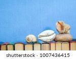 sea shells and stones on... | Shutterstock . vector #1007436415