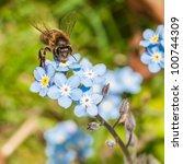 A Little Bee Enjoys The Pollen...