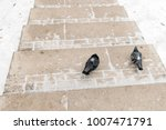 Two Pigeons On A Snow Covered...